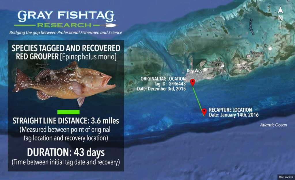 GFR6443-Red-Grouper-Recovery