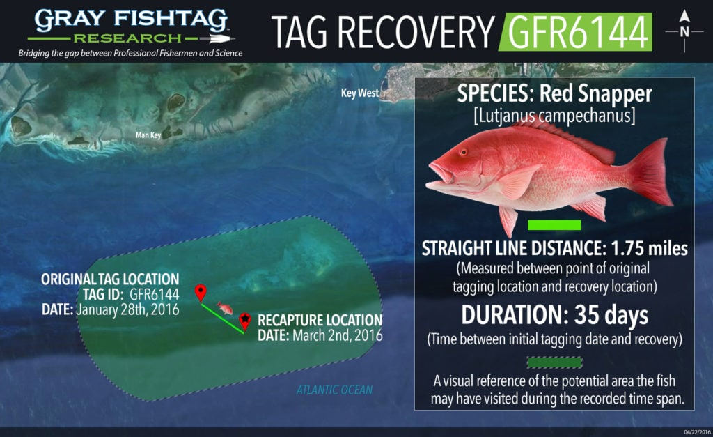GFR6144-RedSnapper-Tag-Recovery