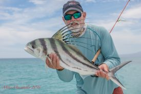 GFR15579-Roosterfish-Recovery-AnglerPhoto