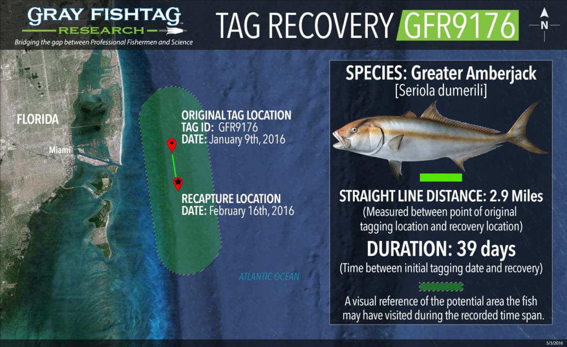 GFR9176-Greater-Amberjack-Recovery