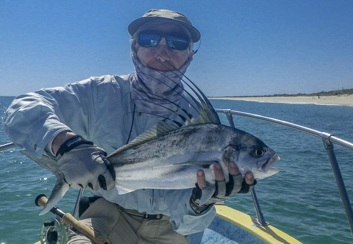 Rooster fish GrayFishTag Research