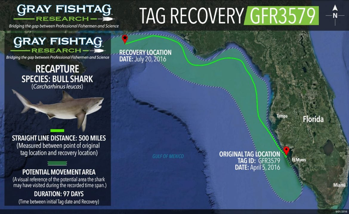 Bull Shark Recaptured!! GFR3579