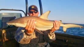 GFR3815 Blacktip Shark