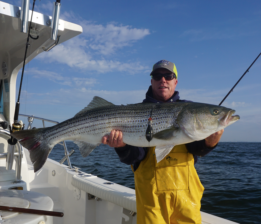 Striped Bass with Satellite Tag